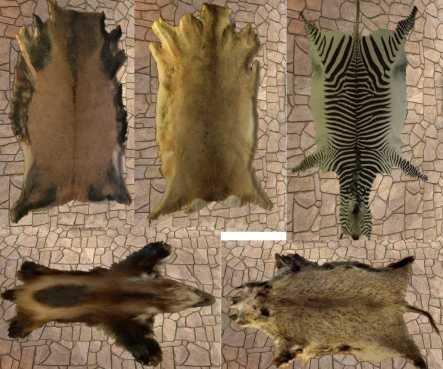 Фото разных меховых шкур